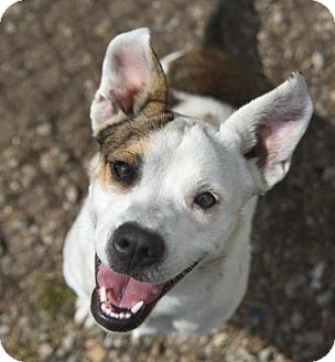 Terrier (Unknown Type, Medium) Mix Dog for adoption in Chattanooga, Tennessee - Sangria