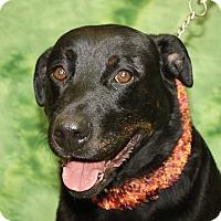 Adopt A Pet :: Zen - Jackson, MI