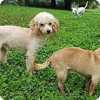 Adopt A Pet :: Tanjee - Sheridan, IL