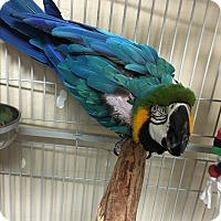Adopt A Pet :: Magoo - Punta Gorda, FL