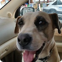 Adopt A Pet :: Sandy - Demorest, GA