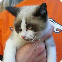 Adopt A Pet :: Blitzen - Denver, CO