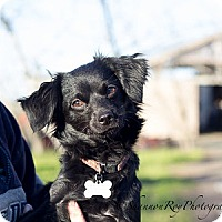Adopt A Pet :: Cha Cha - Vacaville, CA