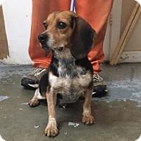 Adopt A Pet :: 6084 - Calhoun, GA