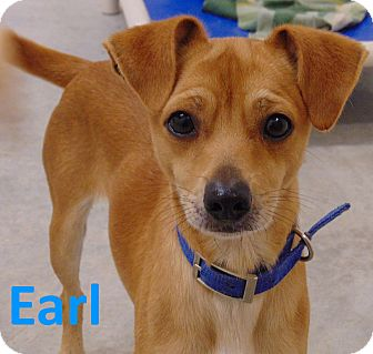 Mountain Cur/Terrier (Unknown Type, Small) Mix Dog for adoption in Mountain View, Arkansas - Earl