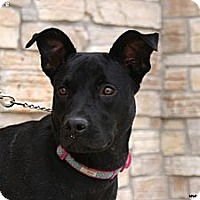Adopt A Pet :: Marie - Newcastle, OK