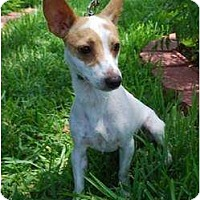 Adopt A Pet :: Tipper in Houston - Houston, TX
