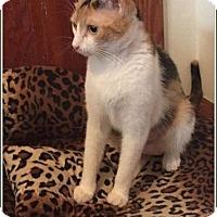 Adopt A Pet :: sunshine - Hampton, VA