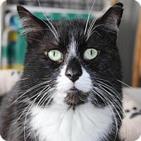 Adopt A Pet :: Tipps - Hamilton, ON