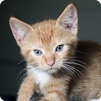 Adopt A Pet :: Dewy - Island Park, NY