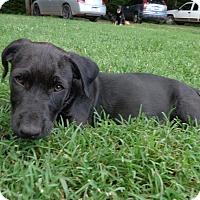 Adopt A Pet :: Eli - Warrenton, NC