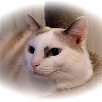 Adopt A Pet :: Marley - Stafford, VA