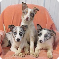 Adopt A Pet :: ALEXIS~ADELE~ANICIA - WOODSFIELD, OH