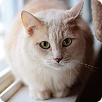Adopt A Pet :: Max - Markham, ON