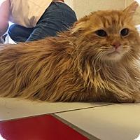 Adopt A Pet :: Henry Higgins - Phoenix, AZ