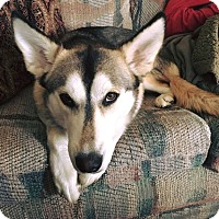 Adopt A Pet :: Nala - Adoption Pending - West Allis, WI