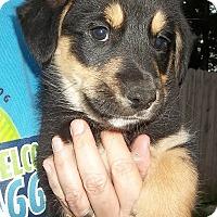 Adopt A Pet :: Jill - Memphis, TN