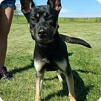 Adopt A Pet :: Bella - Lisbon, OH