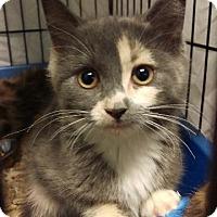 Adopt A Pet :: Kyra - Brainardsville, NY