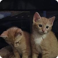 Adopt A Pet :: Obi-Wan - Millersville, MD