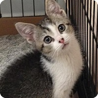 Adopt A Pet :: Lucy - East Brunswick, NJ