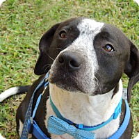 Adopt A Pet :: Wendell - Humble, TX