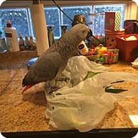 Adopt A Pet :: Shasta - Elizabeth, CO