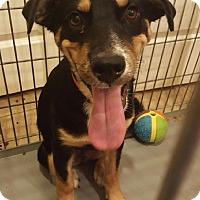 Adopt A Pet :: Harbin - Peoria, AZ