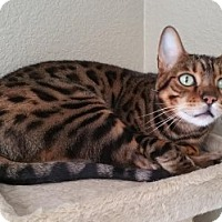 Adopt A Pet :: Finnegan - Davis, CA