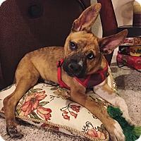 Adopt A Pet :: Rogue - Lodi, CA
