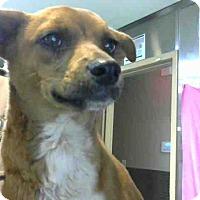 Adopt A Pet :: URGENT on 10/22 @DEVORE - San Bernardino, CA