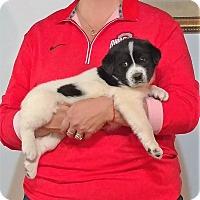Adopt A Pet :: Roxie - South Euclid, OH