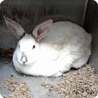 Adopt A Pet :: Bonnie $20 - Seneca, SC