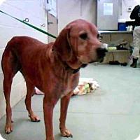 Adopt A Pet :: BOBBY - Conroe, TX