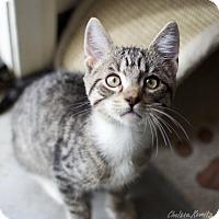 Adopt A Pet :: Tobias - Canyon Country, CA