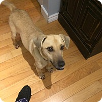Adopt A Pet :: Castor - St. Catharines, ON
