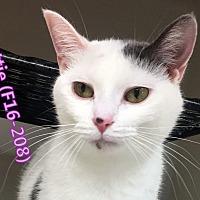 Adopt A Pet :: Mattie - Tiffin, OH