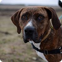 Hound (Unknown Type) Mix Dog for adoption in Grinnell, Iowa - Sundance