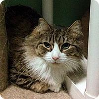 Adopt A Pet :: Krissy - Larchmont, NY