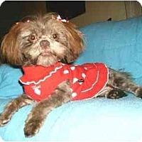 Adopt A Pet :: Brynn - Mooy, AL