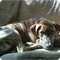Adopt A Pet :: Toby - in Maine - kennebunkport, ME