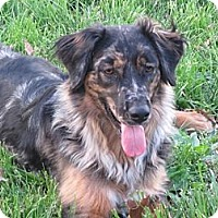 Adopt A Pet :: Brandy - Washington, IL