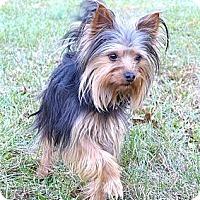 Adopt A Pet :: Jax - Mocksville, NC