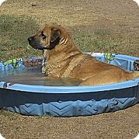 Adopt A Pet :: MAXINE - Glendale, AZ