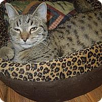 Adopt A Pet :: Samantha - Medina, OH