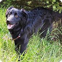 Adopt A Pet :: Willie - Osseo, MN