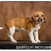 Adopt A Pet :: Ron - Owensboro, KY
