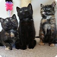 Adopt A Pet :: Petunia Juniper and Marigold - San Ramon, CA