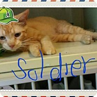 Adopt A Pet :: Soldier - Iroquois, IL