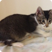 Adopt A Pet :: Peter - Santa Rosa, CA